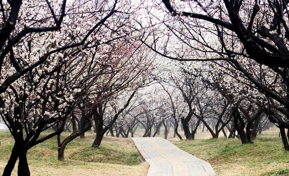 初春二月 苏州赏梅正当时